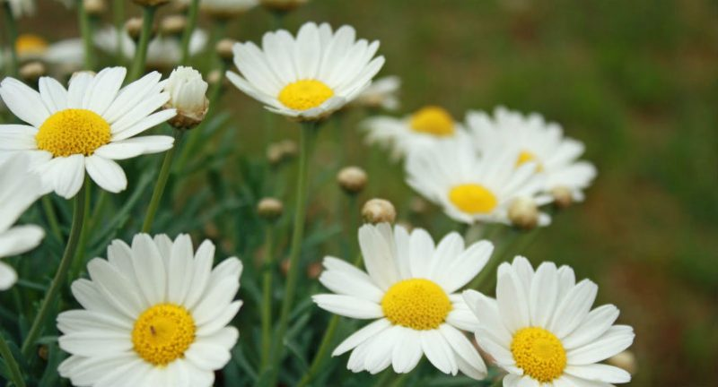Qual o plural de florzinha?