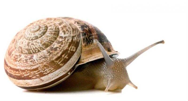 Plural de caracol é caracóis ou caracois? Com ou sem acento?